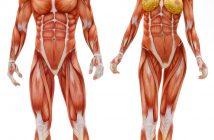 guide-orthopaedic-surgeon-singapore